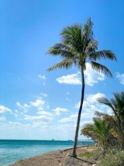 USA-stan Floryda-Key Biscayne-plaża w okolicy latarni morskiej 10
