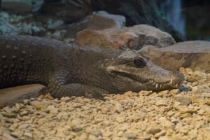 2015-08-01 Bristol Zoo at night 072