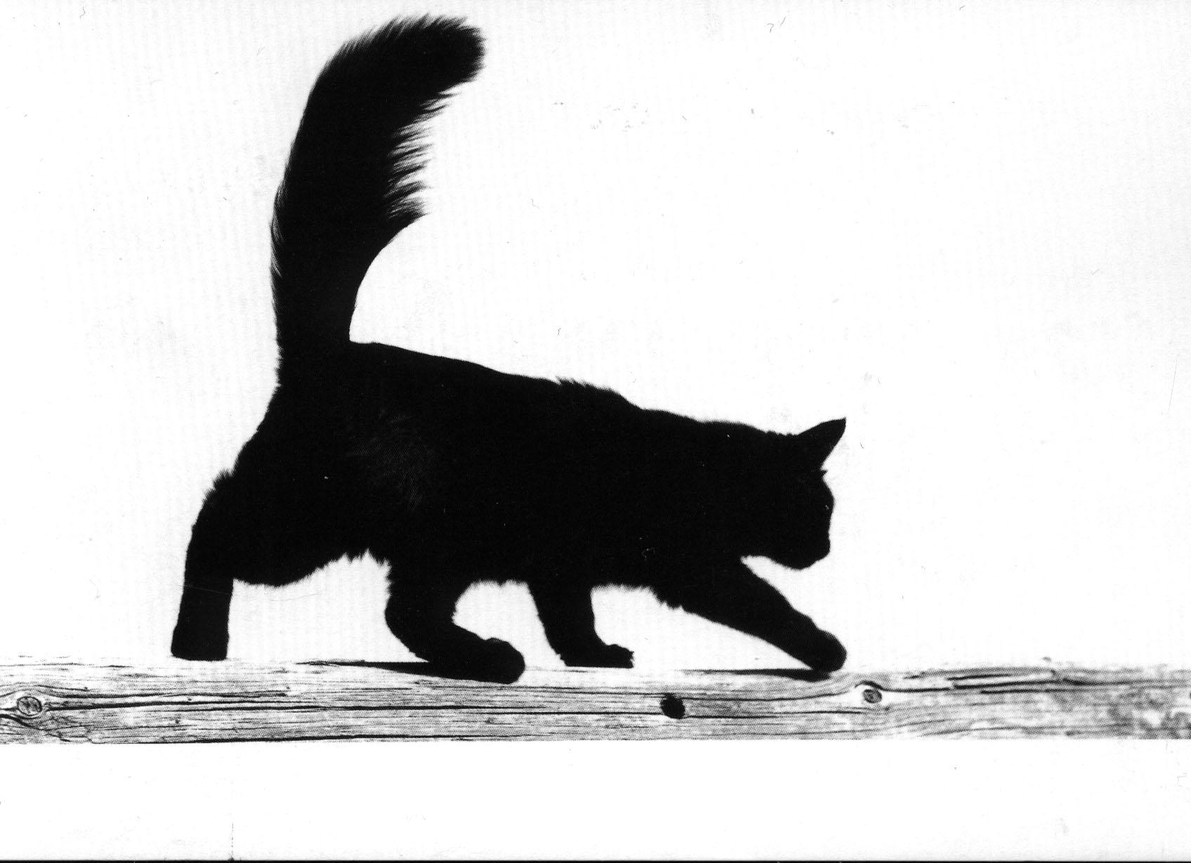 Chat Noir Fragmentdetags