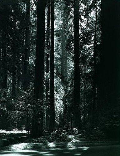 Redwoods, Founders Grove