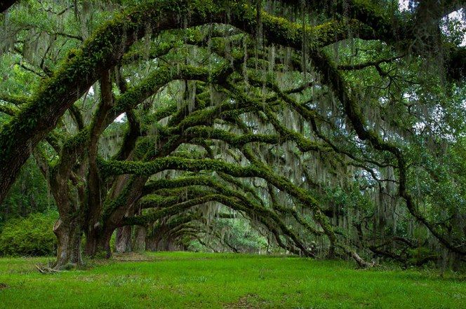 Dixie Plantation, Avenue Of Oaks, South Carolina