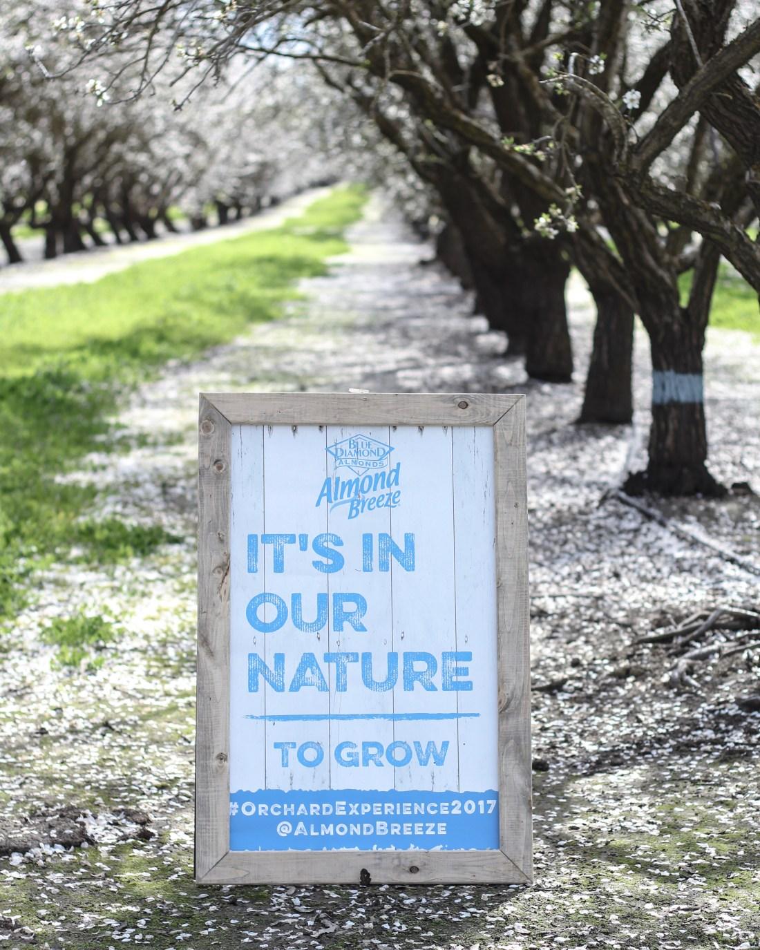 Sacramento Almond Orchard