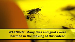 Warning - Many flies and gnats were harmed in the making of this video
