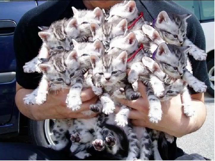 Un chaton, deux chatons... des chatons !