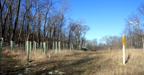 Gas pipeline reforestation, saplings in every tube