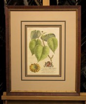 Botanicals from the Age of Enlightenment