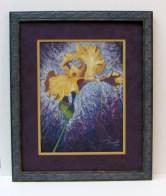 Iris Pastel