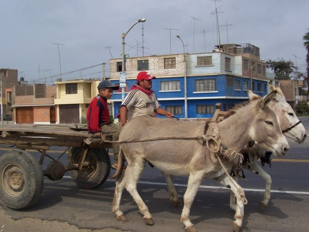 Man drives a donkey cart along the edge of the Pan Amerian Highway in Peru, South America