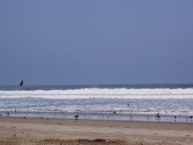 Pacific Ocean at Playa Sarcpampa, Peru 1