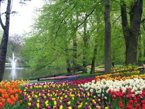 Keukenhof Gardens early morning