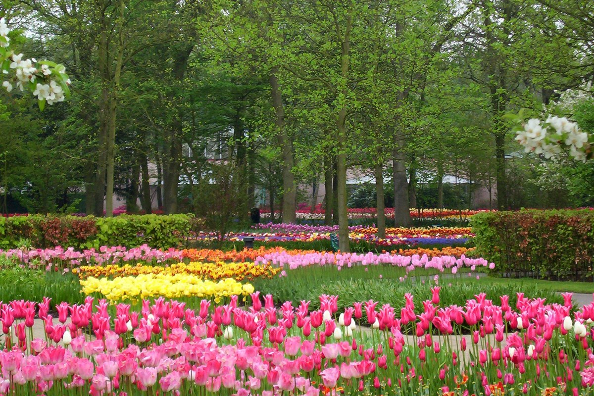 Keukenhof Gardens Our Visit To Holland S World Of Tulips