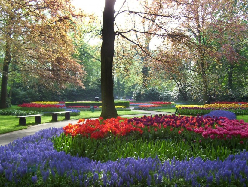 An image of the tulip and flower beds along a walkway at Keukenhof Gardens in Lisse, the Netherlands. Photography by Frame To Frame - Bob and Jean.