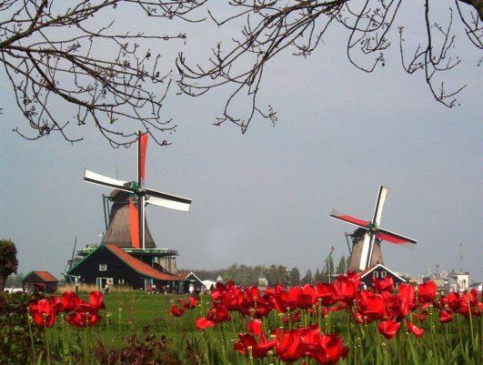 Two working windmills at Zaanse Schans Holland