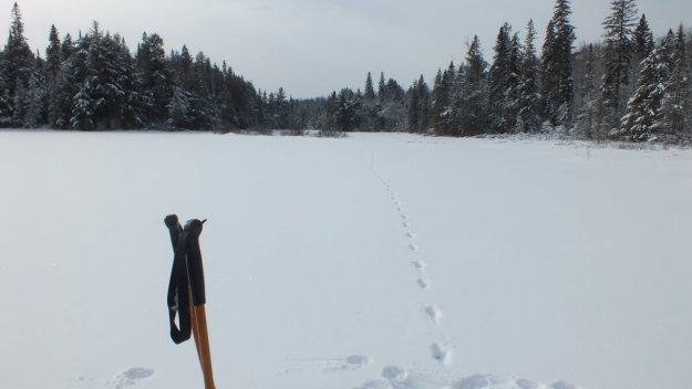 Animal tracks on Fen Lake - Algonquin Park - Ontario