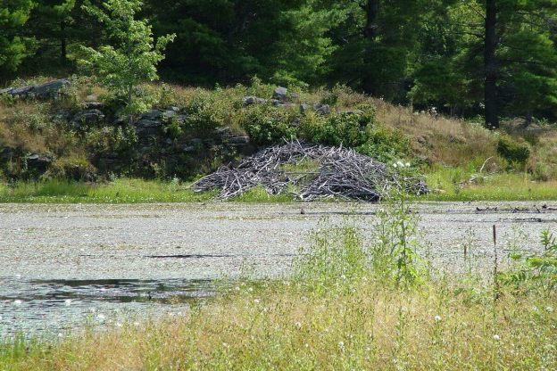 Beaver lodge - Ontario - Canada