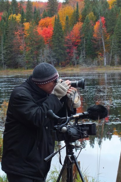 Bob films beavers in Algonquin Park - fall - Ontario