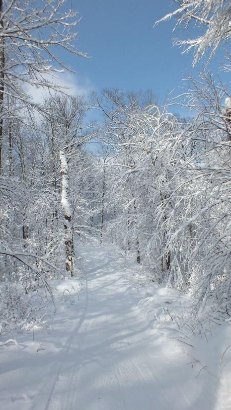 Cabin Trail - Fen Lake Ski Trail - Algonquin Park - Ontario