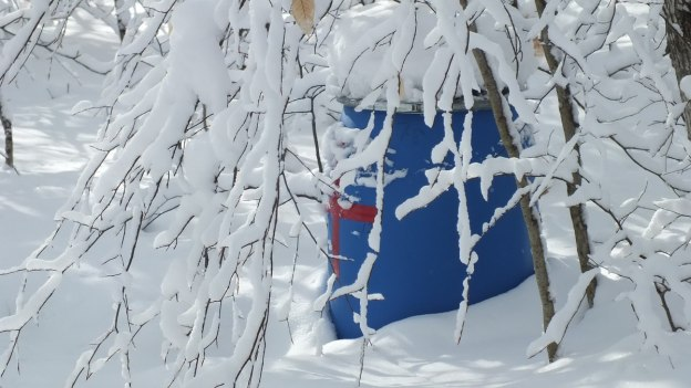 Emergency barrel under snow covered trees - Fen Lake Ski Trail - Algonquin Park - Ontario