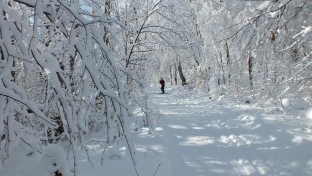 Jean on the snowy Fen Lake Ski Trail - Algonquin Park - Ontario