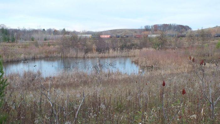 Pond 1, Rouge National Park, Toronto