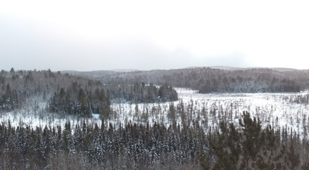 Snow over Algonquin Park - Ontario