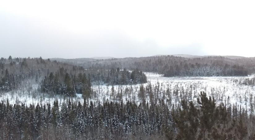 Snow over Algonquin Park - Ontario