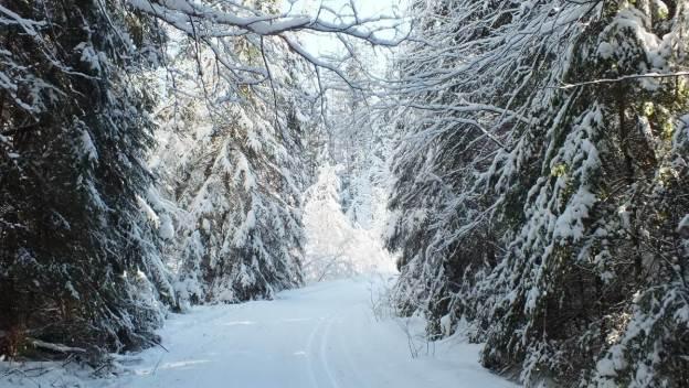 Snowy corner - Fen Lake Trail - Algonquin Park - Ontario