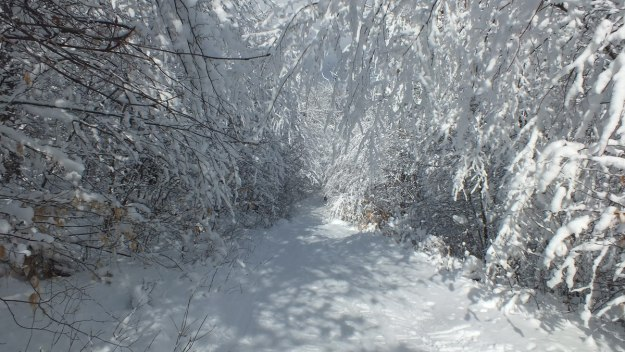 Snowy tunnel on - Fen Lake Ski Trail - Algonquin Park - Ontario