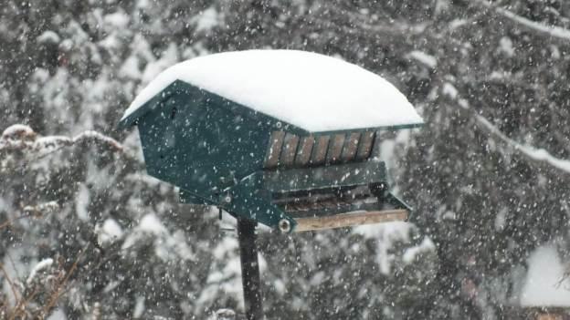 Bird feeder lost in snow storm in Toronto
