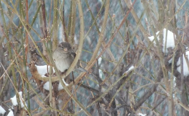 Bird sits in bush during toronto snowstorm
