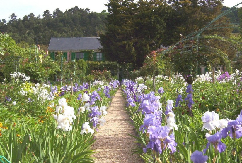 An image of Irises growing in Claude Monet's garden in Giverny, France.