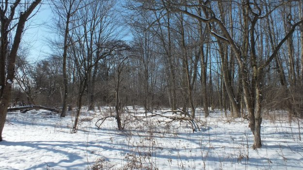 Lynde Shores Conservation Area - snowy forest - Whitby - Ontario