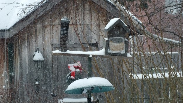 Snow falling in North Toronto - abandoned bird feeders
