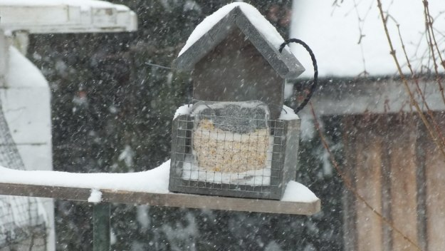 Suet feeder lost in snowstorm in Toronto