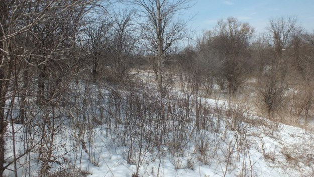 Photo of bush in the Claireville Conservation Area, in Toronto - Ontario March 8, 2013