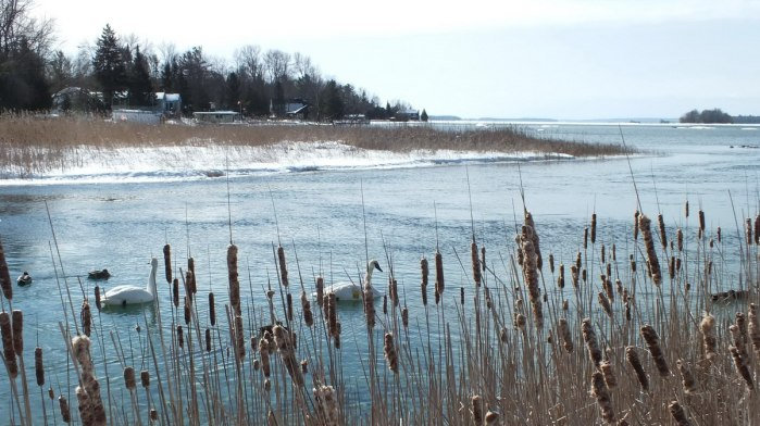 Winter view of Lake Couchiching from oak point rd in washago - Ontario