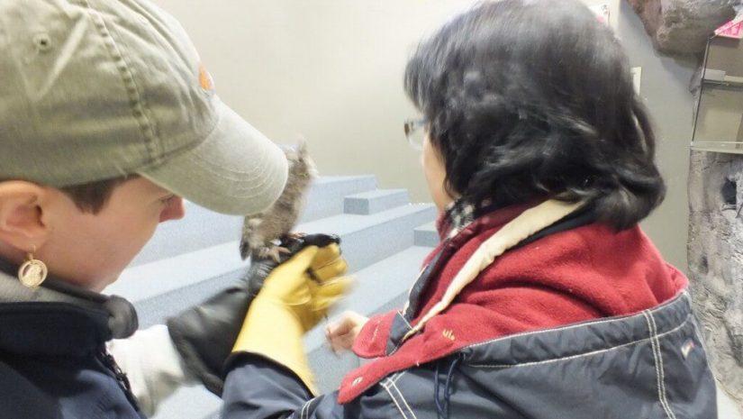 Sandra shows Jean how to hold the Eastern Screech Owl - Mountsberg Raptor Centre