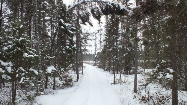 Spruce Bog boardwalk covered with snow in late winter in Algonquin Provincial Park - Ontario