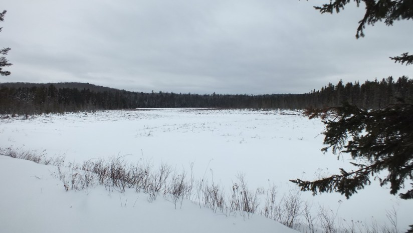A photo of the Spruce Bog in Algonquin Provincial Park under March snow.