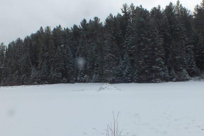 beaver lodge - algonquin park