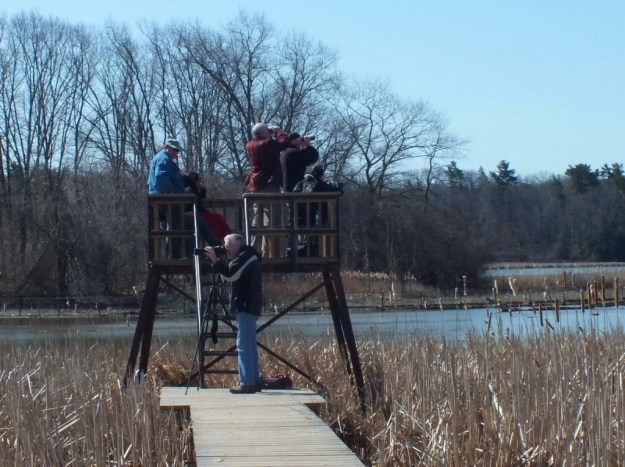 Birdwatchers - Cootes Paradise Marsh - Hamilton - Ontario