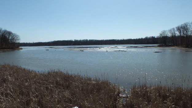 Cootes Paradise Marsh - Hamilton - Ontario