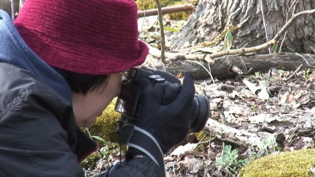 Jean takes pictures of plants at Beamer Memorial Conservation Area, Grimsby