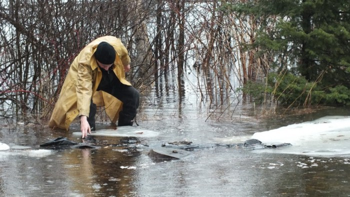 Oxtongue Lake flooding - Bob retrieves plastic sheet floating in flood waters- April 20 2013