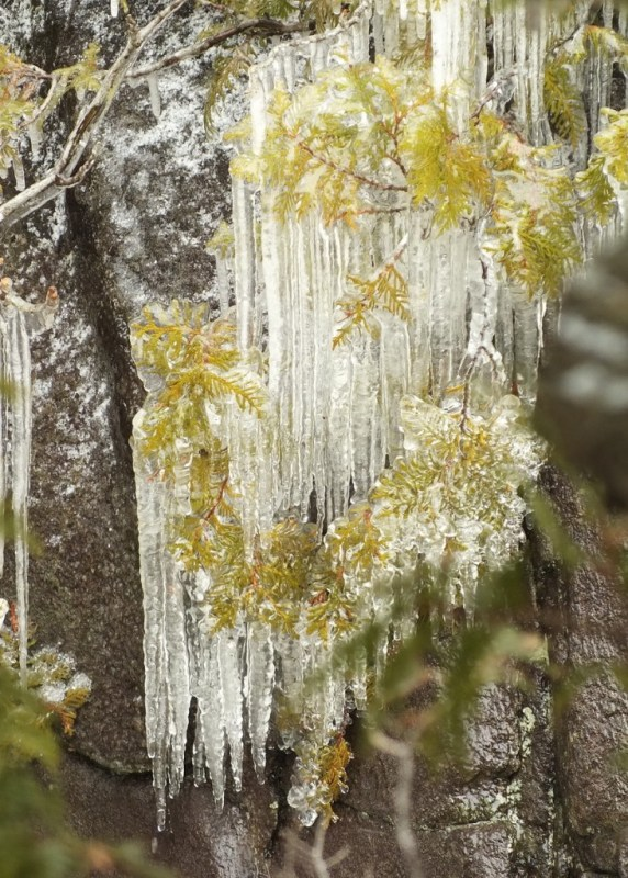 Ragged Falls - a wall of icicles above river - Oxtongue River - Ontario - April 20 2013