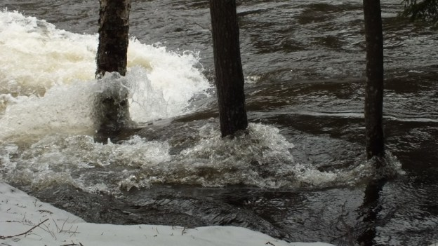 Ragged Falls - flooded trees - Oxtongue River - Ontario - April 20 2013