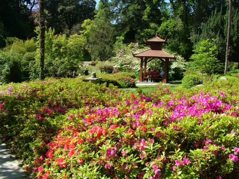 orange and pink rhododendrons - powerscourt - wicklow - ireland