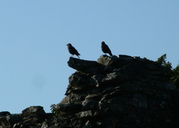 Black Crows sit on Glenalough Cathedral - Ireland