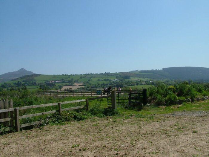 Chris works race horse in paddock - Onagh Farm - Enniskerry - Wicklow - Ireland