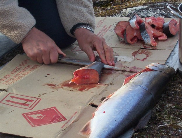 Arctic char being prep for dinner, Nunavut, Canada
